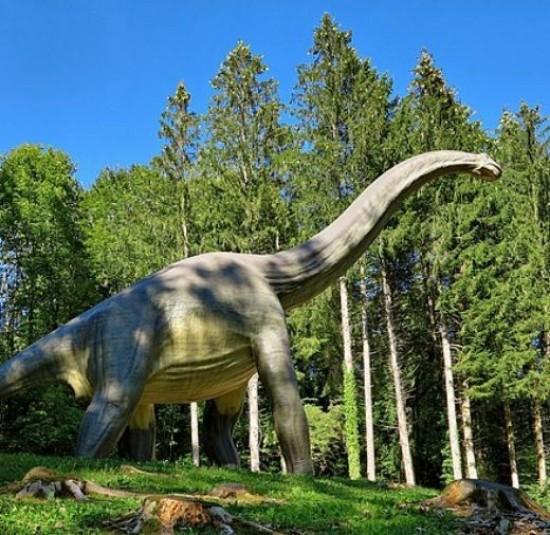 The Dino-Zoo